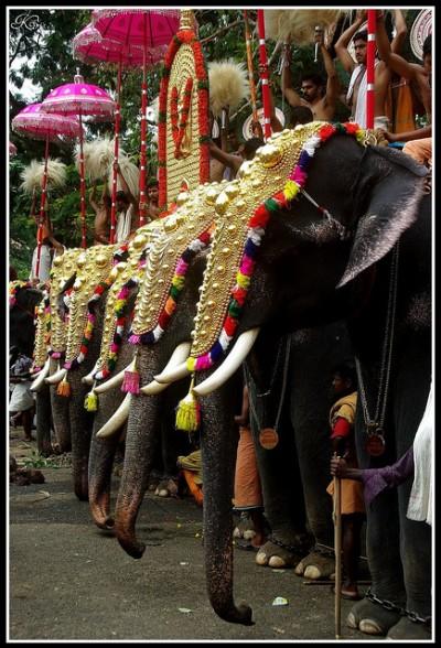 Elephant chariot festival, Kerala, India - flickr