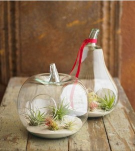 Air plant terrariums, Viva Terra