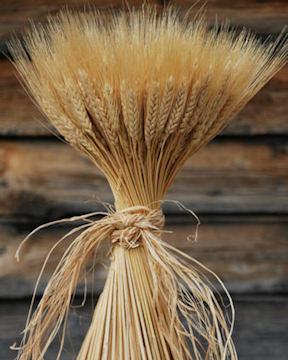 wheat-bundle-1lb_MED