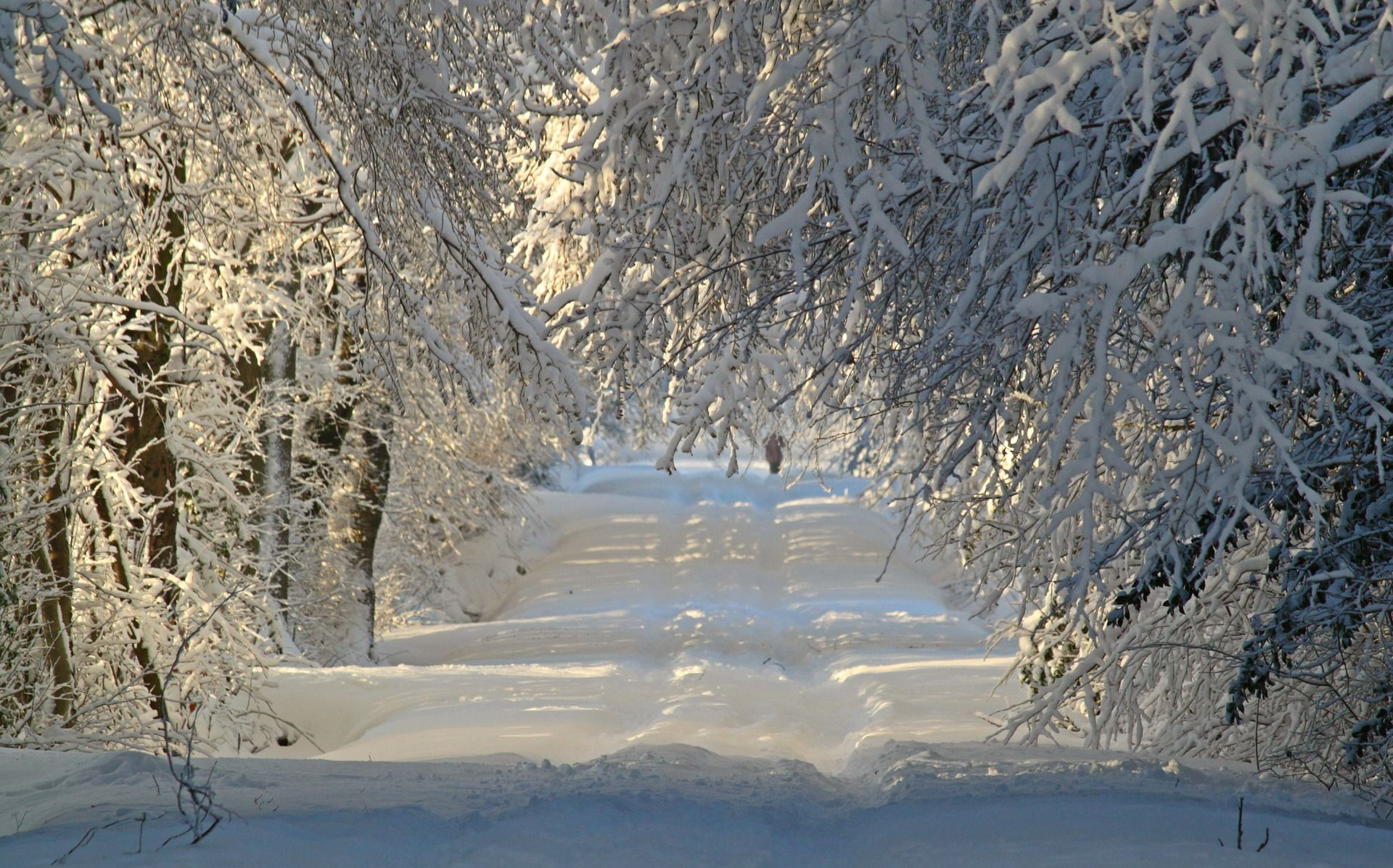 winter wonderland theme to inspire winter home decor