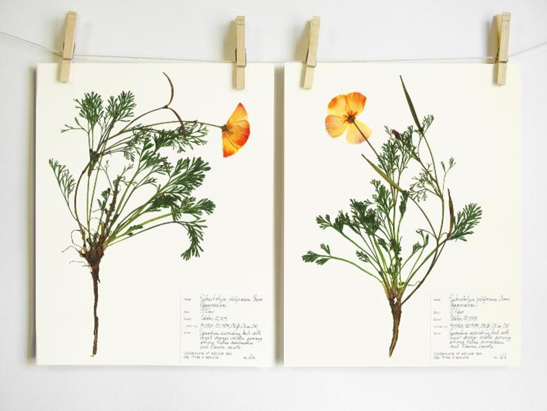 A floral print that's a botanical print of yellow poppies, California poppies