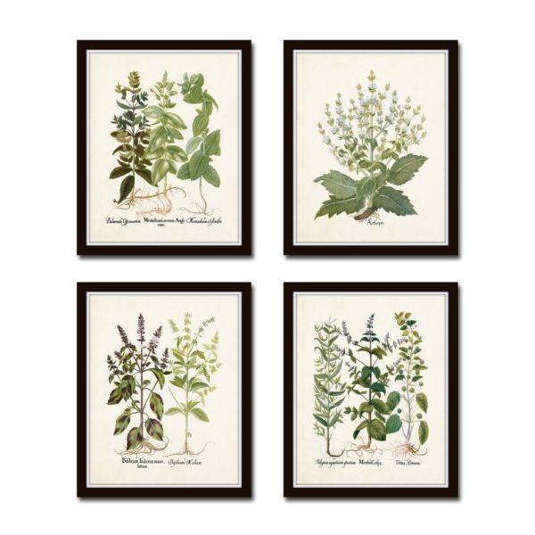 set of botanical prints