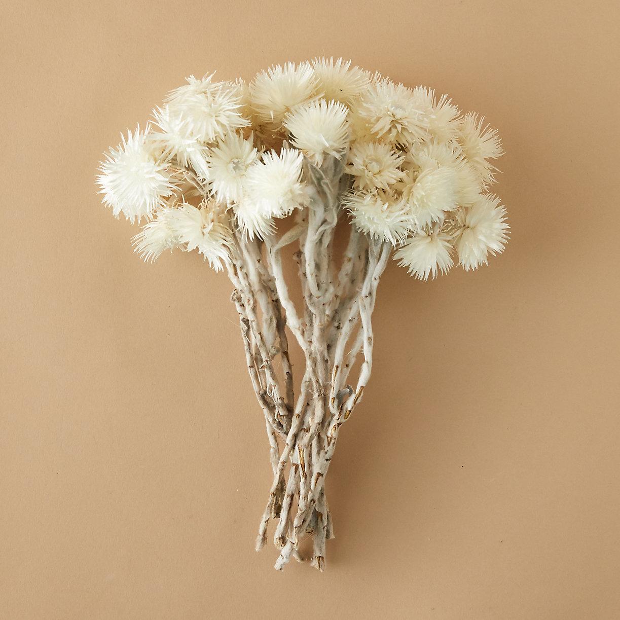 Everlasting Flower Bunch