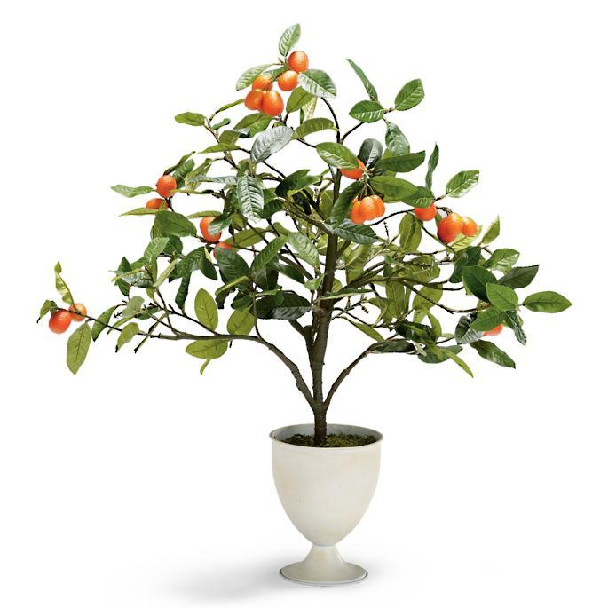 Berry And Bright Indoor Potted Kumquat