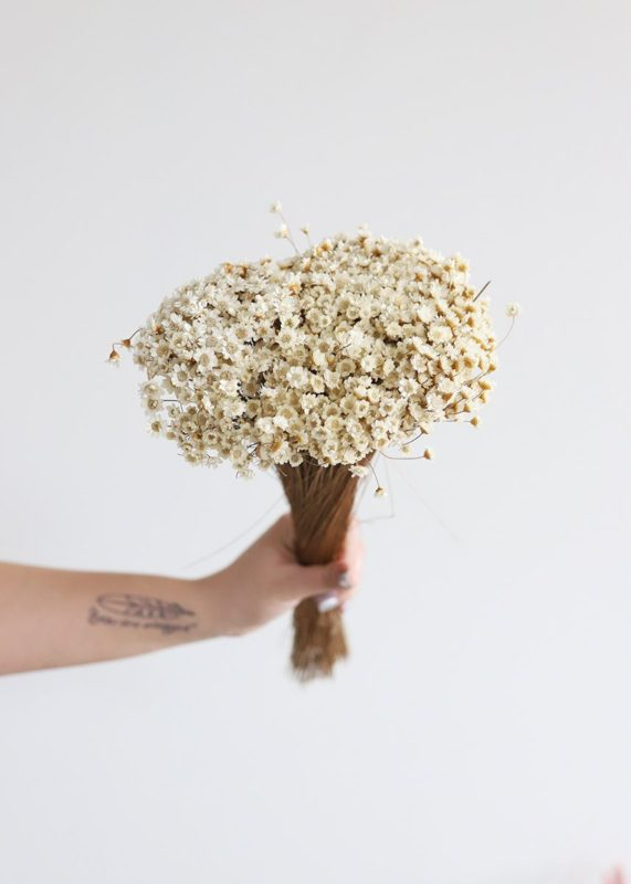 Preserved dried star flowers for Mother's Day
