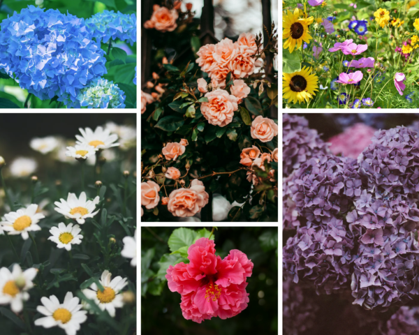 a collage of flowers with blue hydrangeas, peach roses, wildflowers, lilacs, hibiscus flowers, and daisies