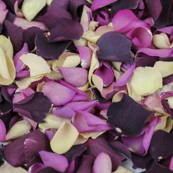 purple, white, and lavender flower petals