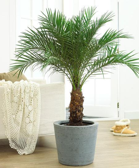 mini palm tree, tropical decor