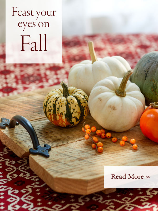 Feast Your Eyes on Fall - Shop Now